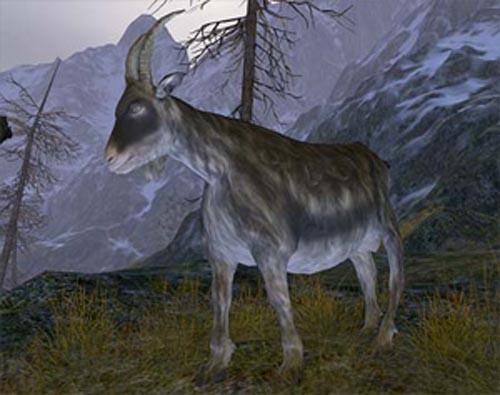 En Age of Conan sacrifican una cabra para celebrar la Navidad