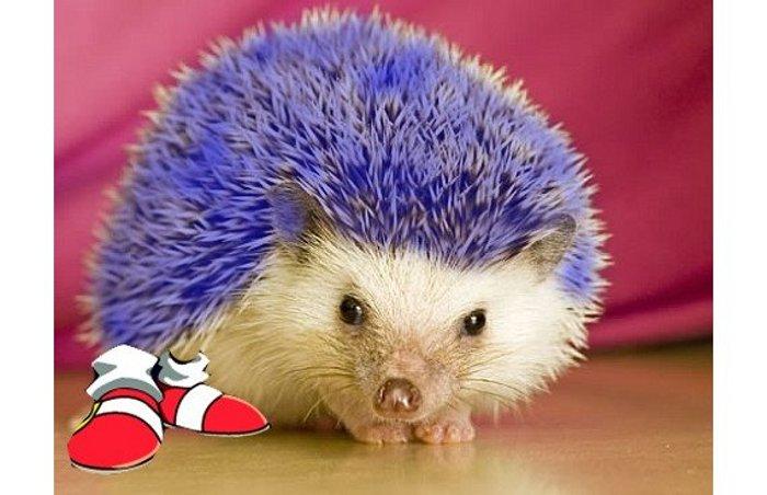 Este podría ser el look de Sonic en su película live action