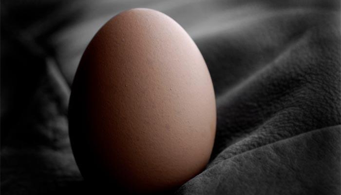 lagzero huevo