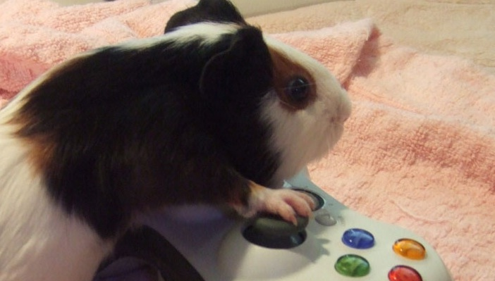 hamster jugando
