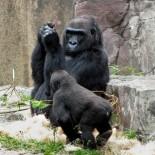 gorilla_con_nintendo_ds_2
