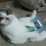 nintendods_cat